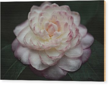 Camellia White And Pink Wood Print