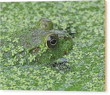 Camo Frog Wood Print by Ronda Ryan
