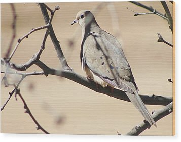 Camouflaged Mourning Dove Wood Print