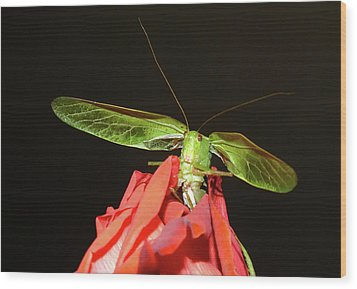 Can You Hear Me Now By Karen Wiles Wood Print