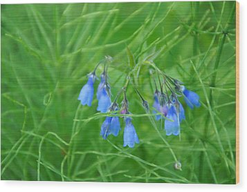 Can You Hear The Blue Bells Wood Print by Bj Hodges