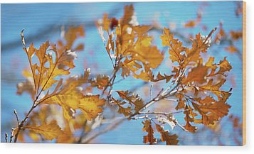 Can You Paint With All The Colors Of The Wind? Wood Print