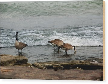 Wood Print featuring the photograph Canada Geese Feeding by Kathleen Stephens