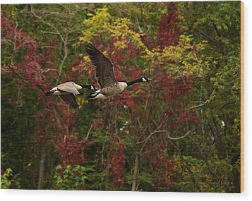 Canada Geese In Autumn Wood Print by Angel Cher