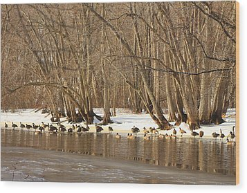 Canada Geese On Concord River Wood Print by John Burk