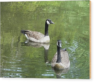 Canada Goose Duo Wood Print by Al Powell Photography USA