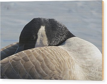 Canada Goose Head Wood Print by Mary Mikawoz