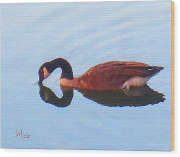 Canada Goose On Clear Lake Wood Print