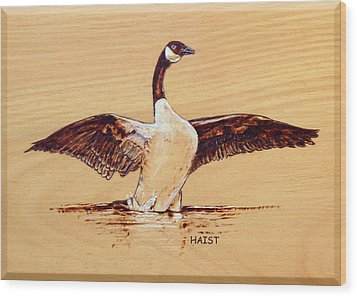 Canada Goose Wood Print by Ron Haist