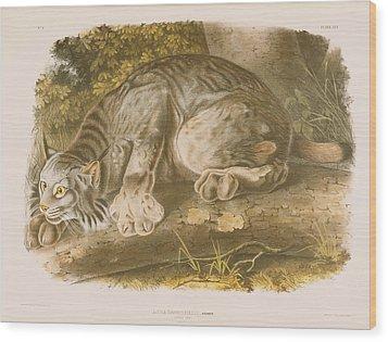 Canada Lynx Wood Print by John James Audubon