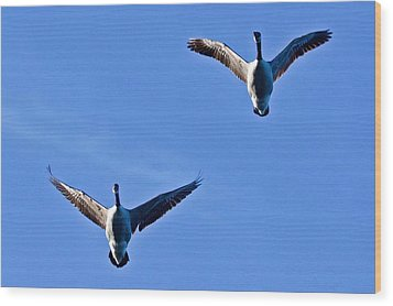 Wood Print featuring the photograph Canadian Geese 1644 by Michael Peychich
