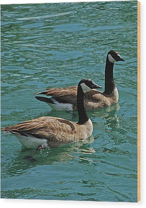 Canadian Geese Wood Print by Carol  Eliassen