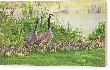 Canadian Geese Family Wood Print by Jennie Marie Schell