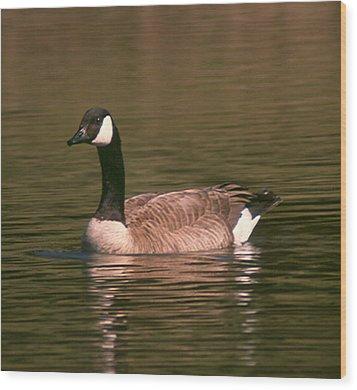 Canadian Goose Wood Print by Bonnie Muir