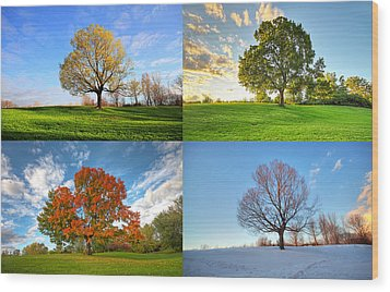 Canadian Seasons Wood Print by Mircea Costina Photography
