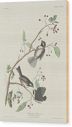 Canadian Titmouse Wood Print by Anton Oreshkin
