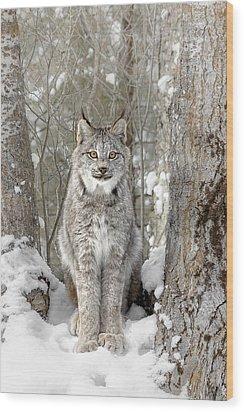 Canadian Wilderness Lynx Wood Print