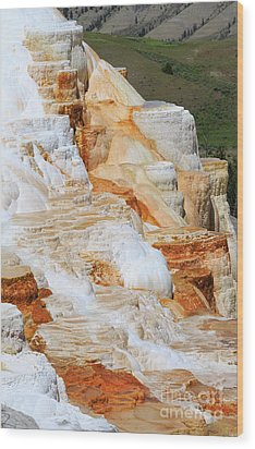 Canary Spring Mammoth Hot Springs Upper Terraces Wood Print by Louise Heusinkveld