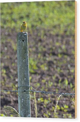 Canary Stop Wood Print