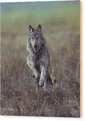 Canis Lupus Wood Print by Tim Fitzharris