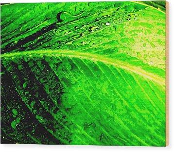 Canna Leaf With Raindrops Wood Print by Beth Akerman
