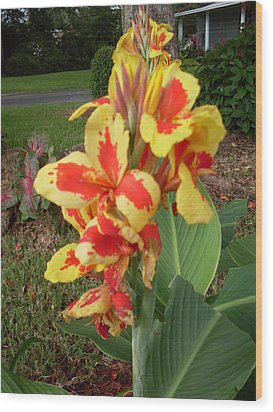 Canna Lily 2 Wood Print by Warren Thompson