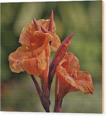 Canna Lily 2945_3 Wood Print