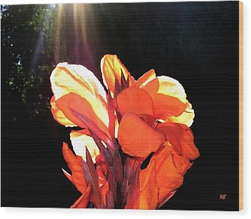 Canna Lily Wood Print by Will Borden