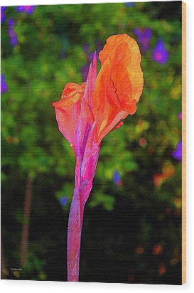 Canna Lily With Althea Wood Print by Fred Jinkins