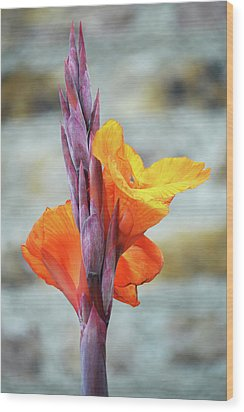 Wood Print featuring the photograph Cannas by Terence Davis
