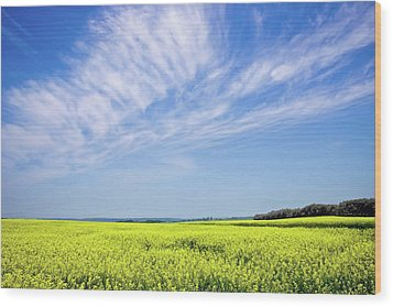 Canola Blue Wood Print by Keith Armstrong