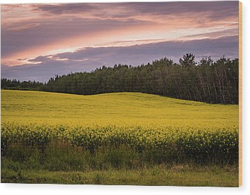 Wood Print featuring the photograph Canola Crop Sunset by Darcy Michaelchuk