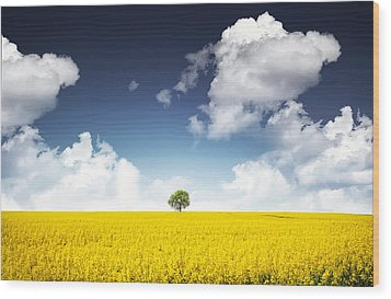 Canola Field Wood Print by Bess Hamiti