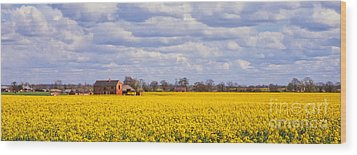 Canola Field Wood Print by John Edwards