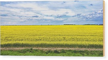 Canola Field - Photography Wood Print by Ann Powell