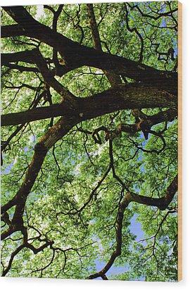 Canopy 1 Wood Print by Rob Tullis
