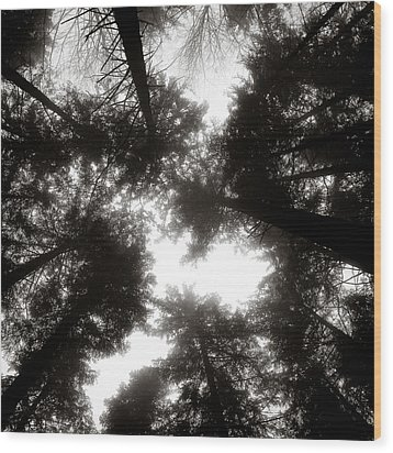Canopy Wood Print by Dave Bowman
