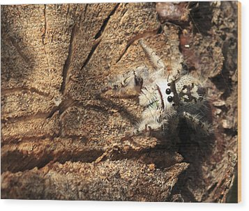 Canopy Jumping Spider Wood Print