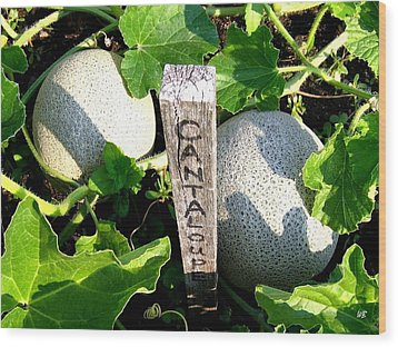 Cantaloupe Wood Print by Will Borden