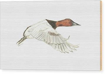 Canvasback Wood Print
