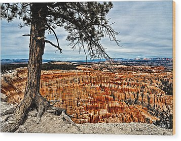 Canyon Overlook Wood Print by Christopher Holmes