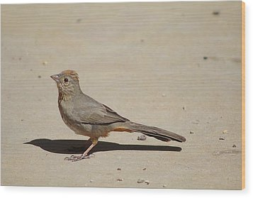 Canyon Towhee Begs Wood Print