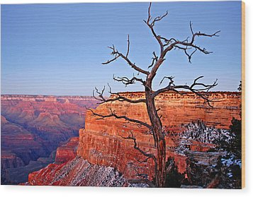 Canyon Tree Wood Print by Peter Tellone