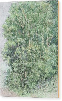 Canyon Trees Colorized Wood Print