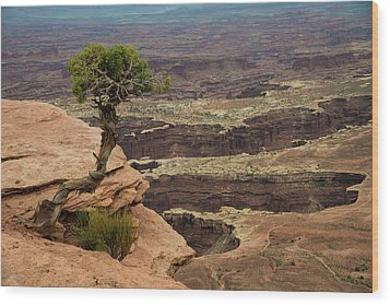 Wood Print featuring the photograph Canyonlands by Gary Lengyel