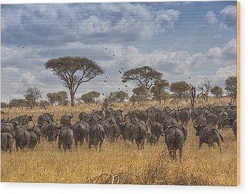 Cape Buffalo Herd Wood Print