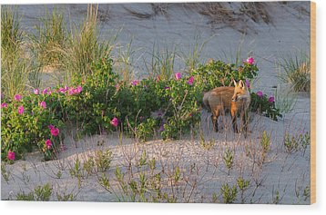 Wood Print featuring the photograph Cape Cod Beach Fox by Bill Wakeley
