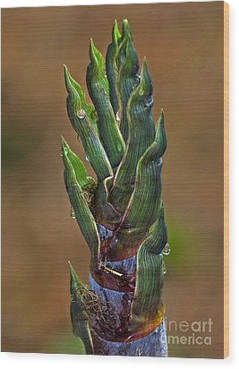 Cape May Bamboo Wood Print by Robert Pilkington
