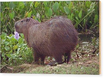 Capybara Wood Print