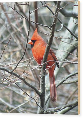 Cardinal 2 Wood Print by George Jones